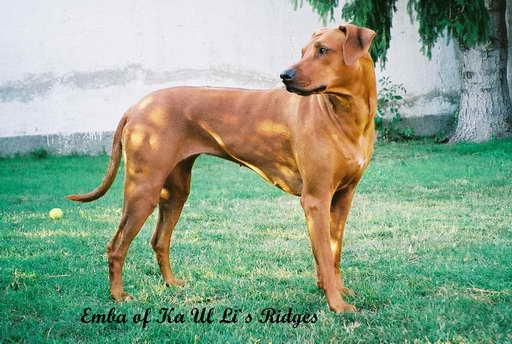 emba_of_ka_ul_lis_ridges